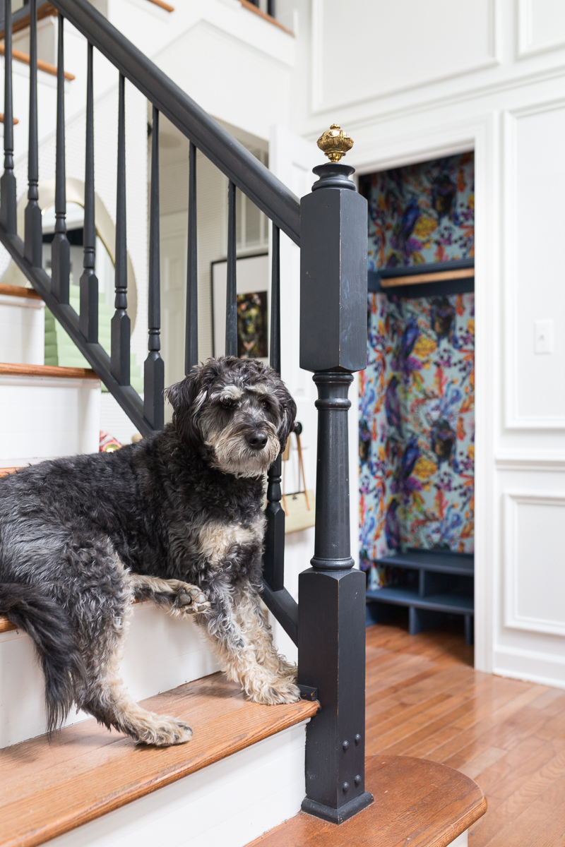 CHECK OUT this hall closet makeover, Ravenswood wallpaper, smith and Honig, closet refresh, built in shoe cubby, removable wallpaper, wallpapered closet, labradoodle